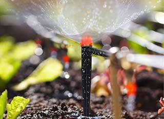 irrigação das plantas do canteiro