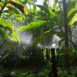 Arruda Irrigações e Jardins
