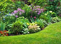 plantas nativas economizando