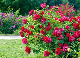 arranjo para um belo jardim